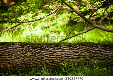 Fresh natural background: tree trunk covered with moss lies in a grass in a forest - stock photo