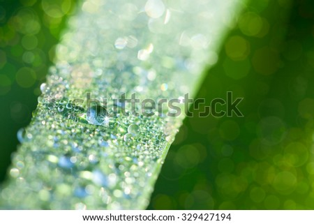 Fresh Nature Background with Grass and water drops, super macro, soft focus and magic lights