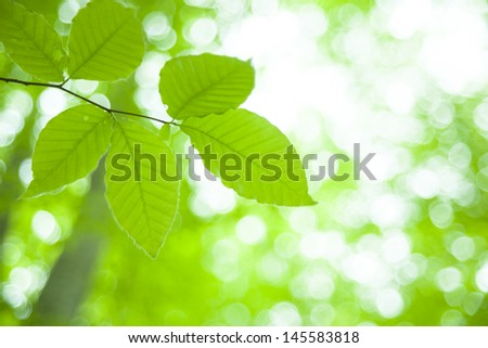 fresh new green leaves glowing in green forest
