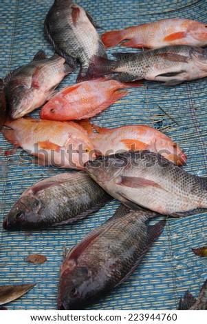 fresh nile tilapia fish show on map for customer to select. Tilapia fish. - stock photo