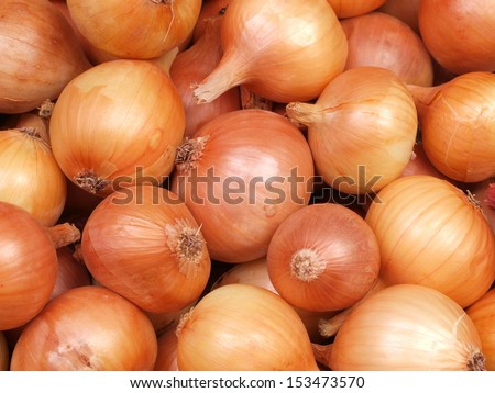 Fresh onion - stock photo