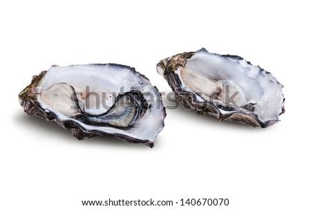 Fresh opened oyster isolated on white background  - stock photo