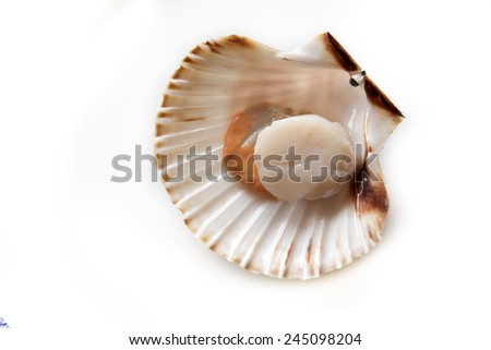 Fresh opened scallop on white background - stock photo