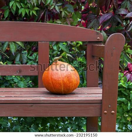 Fresh orange pumpkin on wooden garden bench - stock photo