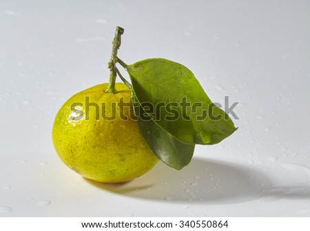 fresh oranges or tangerines on leafy branch isolated on white background.