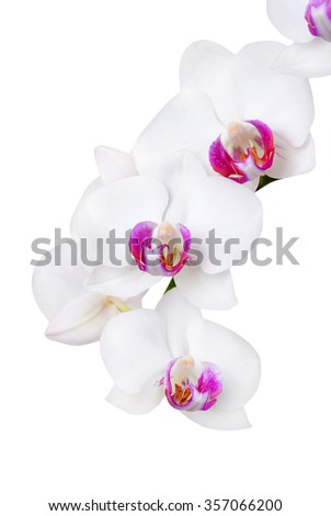 Fresh orchid flower, isolated on white background