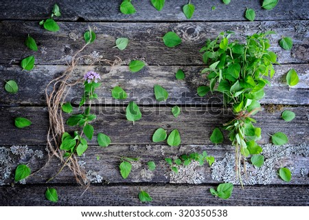 Fresh oregano herb on a wooden background