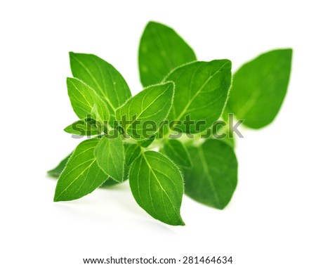 fresh oregano leaves isolated