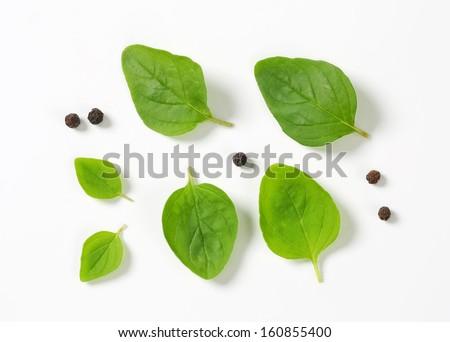 fresh oregano leaves with pepper - stock photo