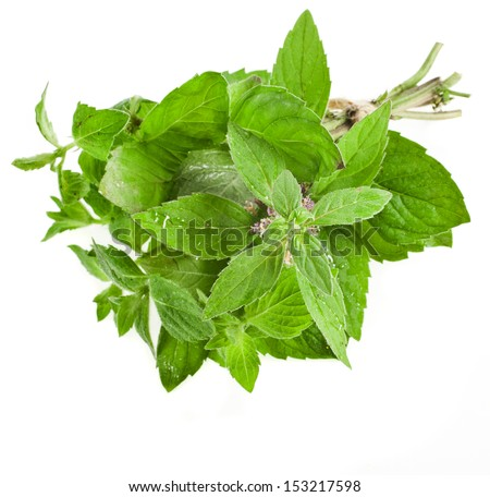 Fresh Oregano or Marjoram Herb close up macro (origanum majorana ) isolated on white  - stock photo