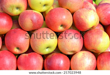 Fresh organic apples on the market in vibrant colors - stock photo