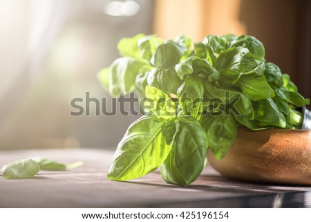 Fresh organic basil - stock photo