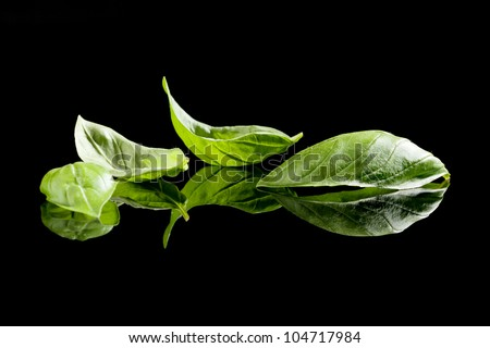 Fresh organic basil leaves isolated on black background. Culinary aromatic herbs. - stock photo