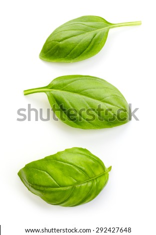 fresh organic basil leaves isolated on white background - stock photo