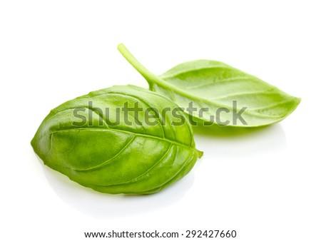 fresh organic basil leaves isolated on white background - stock photo
