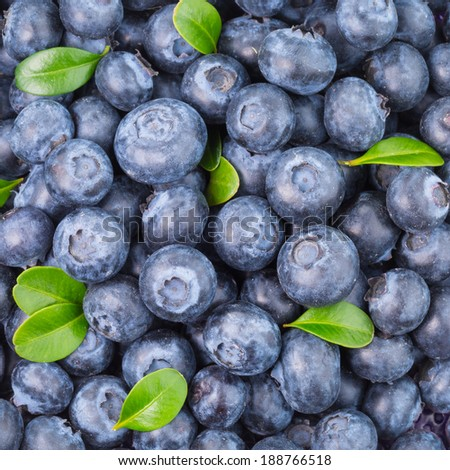 Fresh organic blueberries background  - stock photo