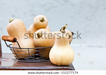 Fresh organic butternut squash in a basket on rustic chair. Also available in vertical format.  - stock photo