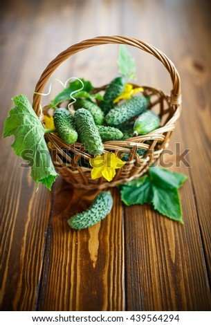 fresh organic cucumbers on a wooden table - stock photo