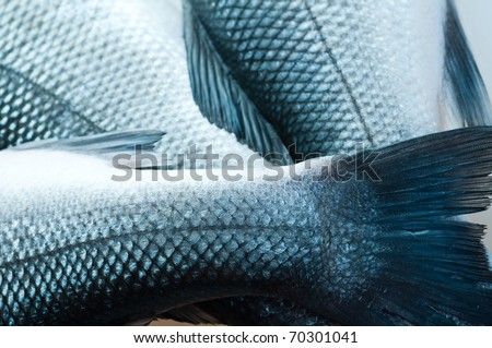 fresh organic fish. on white - stock photo
