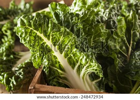 Fresh Organic Green Chard Ready to Eat - stock photo