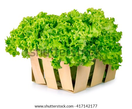 Fresh Organic Green Lettuce In A Basket Isolated On White Background Vegetable Salad Lettuce