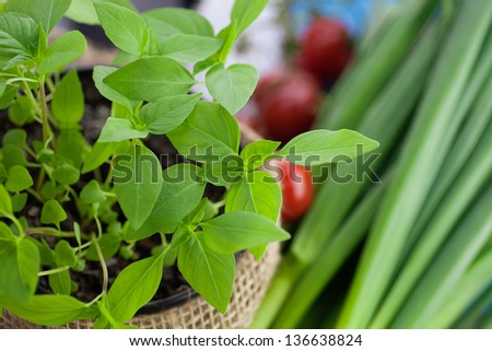 Fresh organic ingredients for cooking in rustic setting: tomatoes, basil, spring onion and garlic - stock photo
