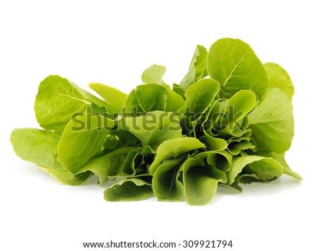 Fresh organic lettuce leaves on a white background - stock photo