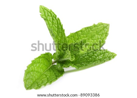 Fresh, organic mint isolated on a white background.