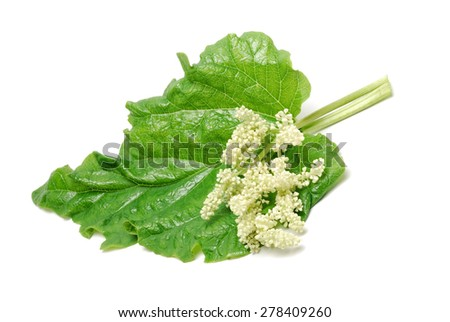 Fresh  organic rhubarb leaves and blooms isolated on white background - stock photo