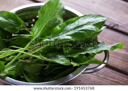 Fresh organic sorrel in bowl on table. Selective focus, horizontal. - stock photo
