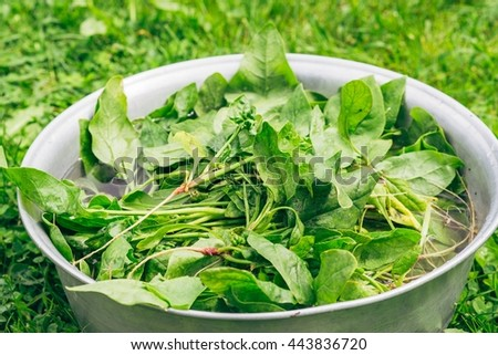 Fresh organic spinach being washed in a large bowl - stock photo