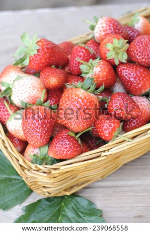 fresh organic strawberry fresh organic strawberry in wicker basket on wooden table.  - stock photo