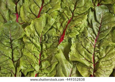 Fresh organic swiss rainbow chard leaves. Top view.  - stock photo
