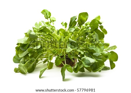 Fresh organic upland cress over white background