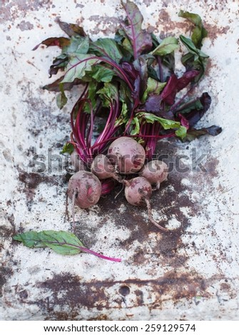Fresh organic vegetables. Bunch of beetroot taken on a vintage metal surface with natural sunbeam. Healthy food from garden. See series. - stock photo