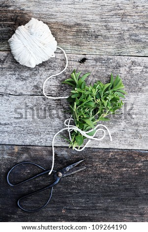 Fresh organically grown stevia tied together in a bundle with antique scissors. - stock photo