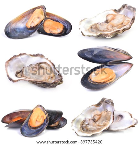 Fresh oyster and mussel  - stock photo
