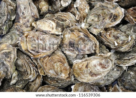 Fresh oysters at a French market