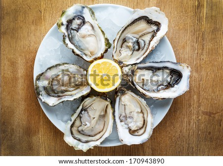 Fresh oysters in a white plate with ice and lemon on a wooden desk - stock photo