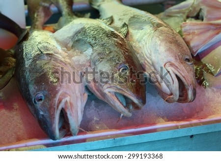 Fresh Pacific Cod on Ice. Fresh Pacific Cod sold at the market - stock photo