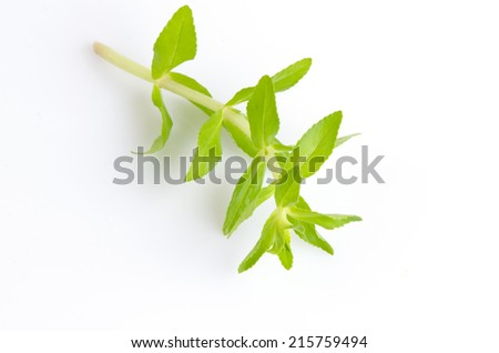 Fresh paddy rice herb isolated on white - stock photo