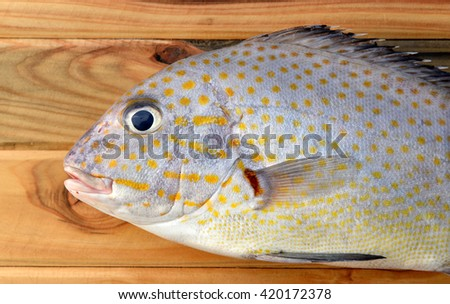 fresh painted sweetlip fish from market on wood in sunlight