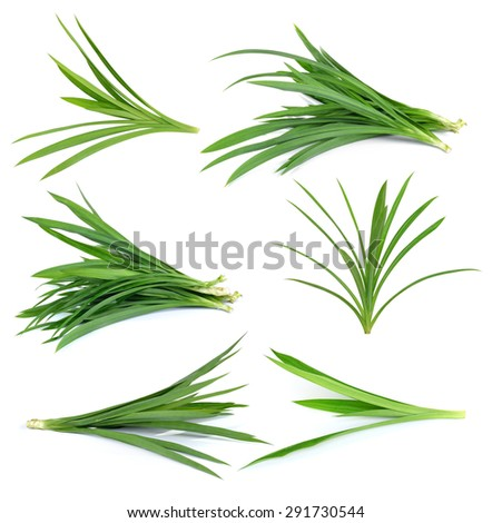 Fresh Pandan leaves isolated on white background - stock photo