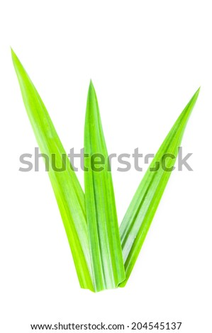 Fresh Pandan leaves on white background