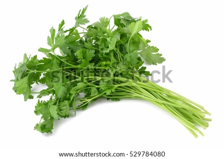 Fresh parsley bunch  isolated on white background