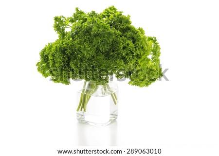 Fresh parsley in the jar - stock photo