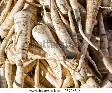 Fresh parsnip for sale on farmers market - stock photo