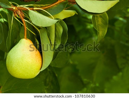 fresh pear on natural background