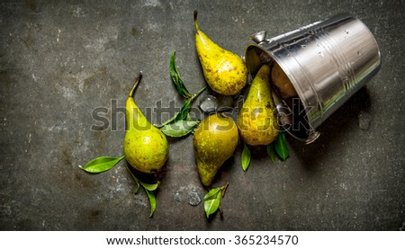 Fresh pears with leaves in a metal bucket. On the stone table. Top view - stock photo