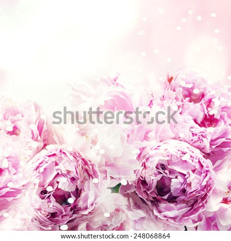 Fresh peony, greeting card for mothers day, 8 March, Valentintines Day - stock photo